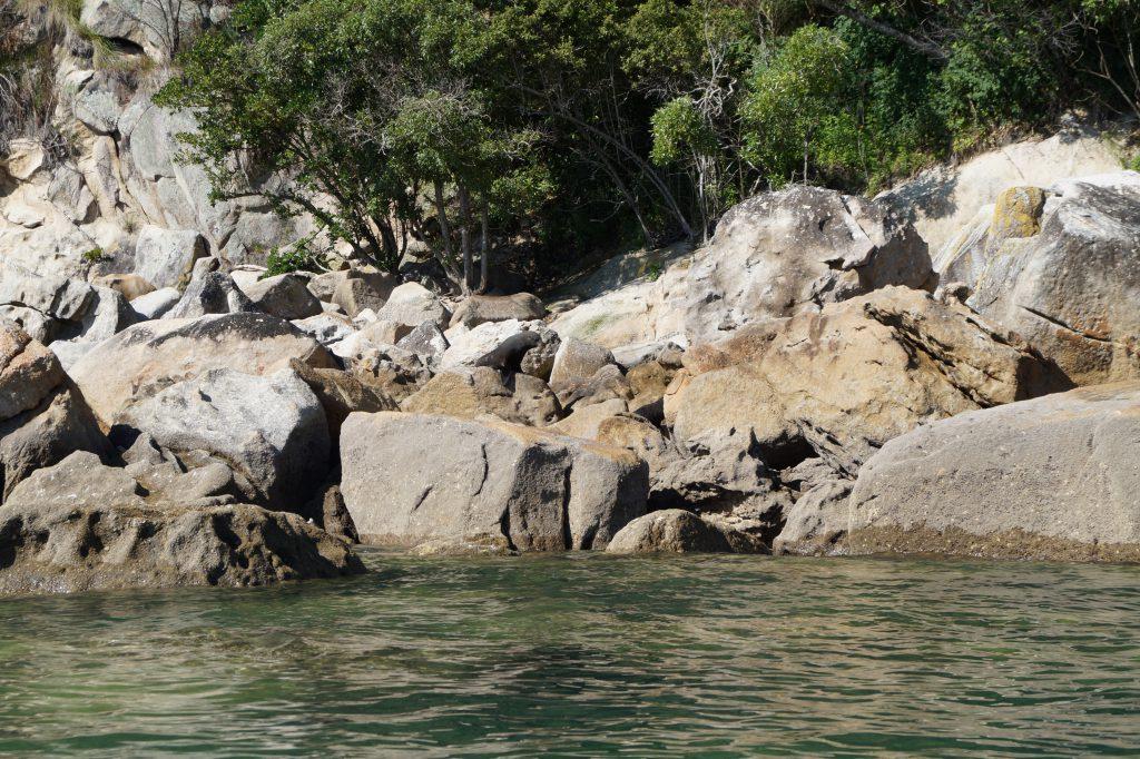 Seehunde im Abel Tasman