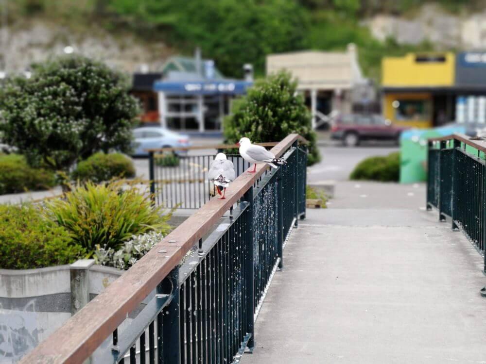 Tag 12 – Kaikoura in Neuseeland