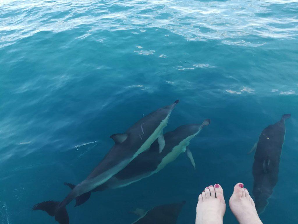 Delfine direkt unter uns