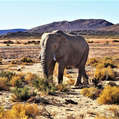 Tag 2 – Aquila Game Reserve, Safari in der Nähe von Kapstadt