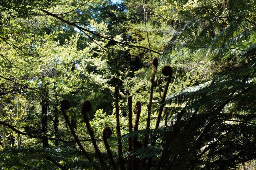 Vegitation im Abel Tasman